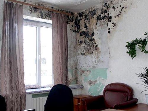 Как избавиться от плесени на стенах и потолке