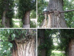 Турник из деревянных столбов